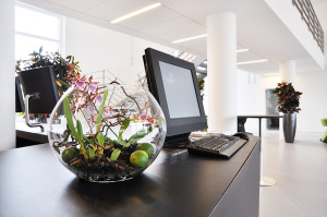 Kontorbeplantning | Et sundere indeklima → Gamstdanplant.dk