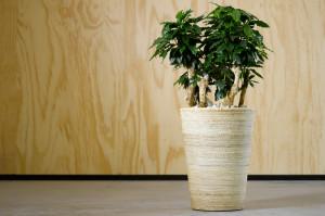 Indendørs planter → Gamstdanplant.dk