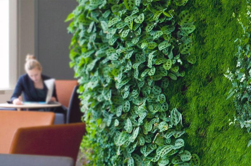 En plantevæg forbedrer indeklimaet på kontoret.